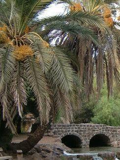 #66 – The Palm Tree of Deborah